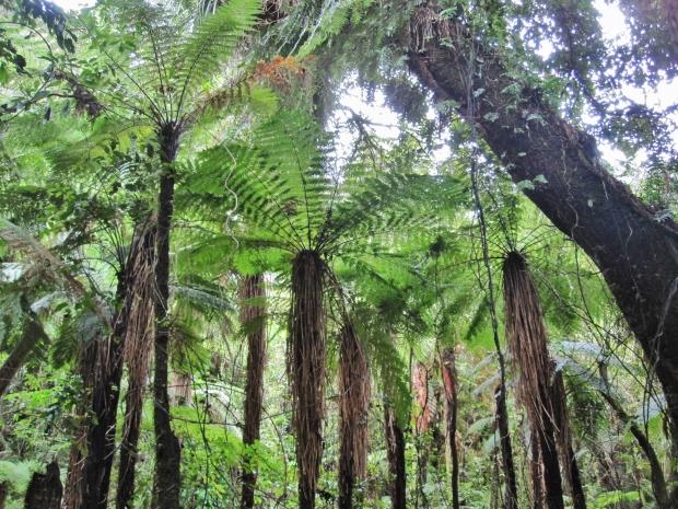 Bush, Kaitoke Regional Park