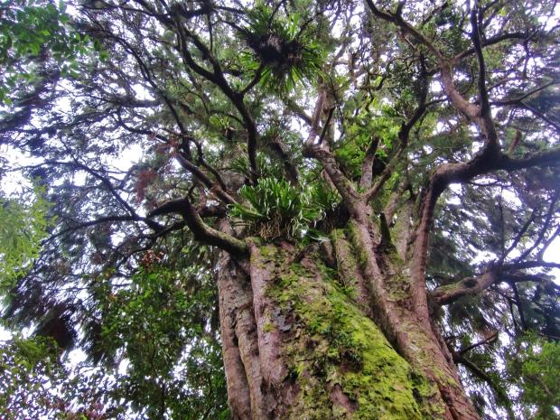 Tree, Kaitoke Regional Park
