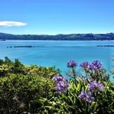 Wellington Harbour from York Bay hills