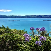 Wellington Harbour from York Bay hills