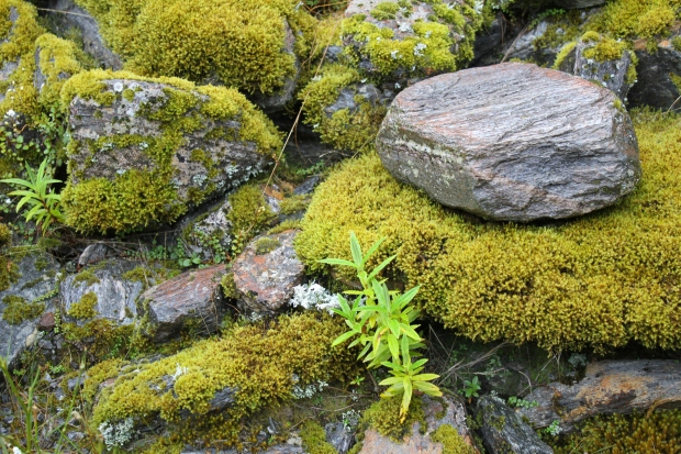 Moss, Fox Glacier