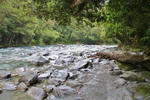 Haast River at Thunder Creek Falls