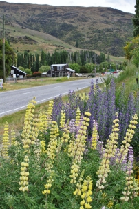 The Crown Range Road through Cardrona