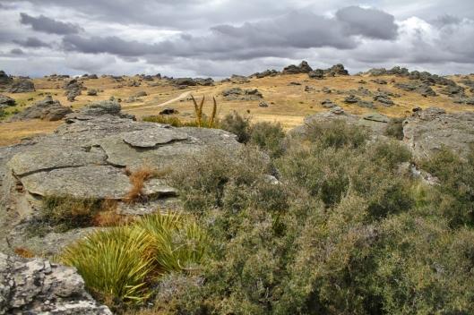 Central Otago schist