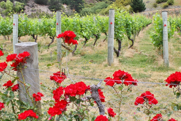 The road runs through the Gibbston Valley, a prominent wine region in these parts