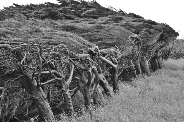 Catlins windblown trees
