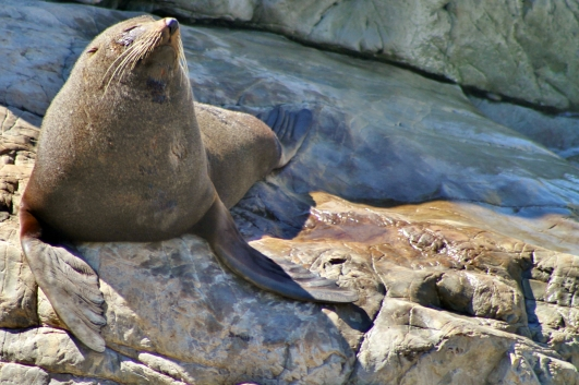Ohau Point seal colony