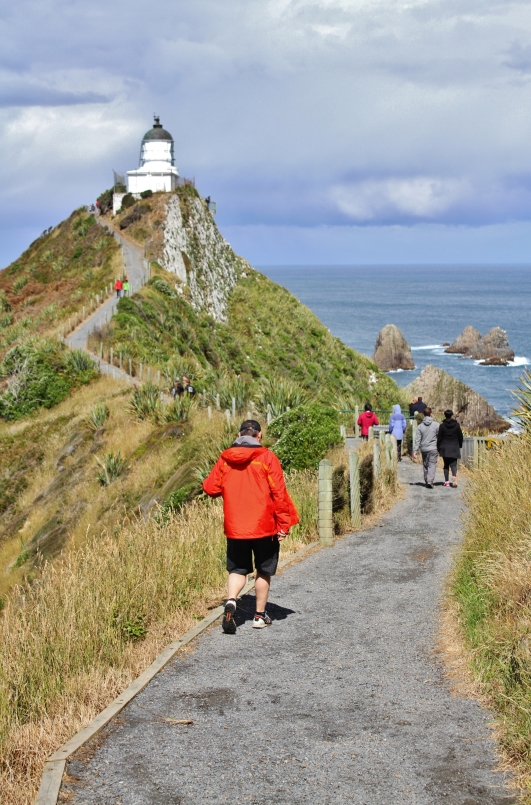The walkway initially hugs the side of a huge steep hill before taking you along a ridge to the Nugget Point lighthouse