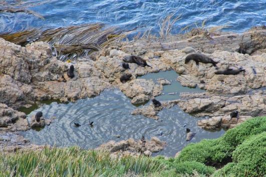 A seal nursery