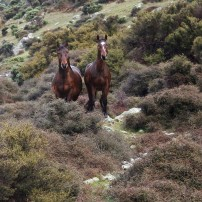 Humans and horses studied each other for a couple of minutes. I almost didn't see them as they blended in to the hillside