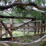 Old fence, Orongorongo Station
