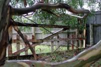 Old fence, Orongorongo Station
