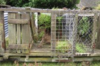 Abandoned kennels, Orongorongo Station
