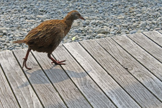First weka encounter during the introductory talk