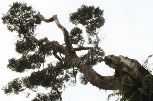 Kapiti Island tree