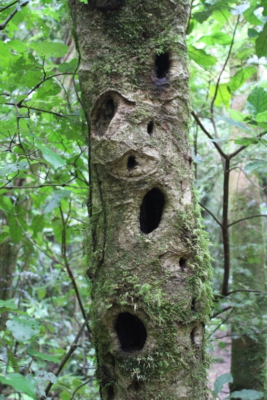 Kapiti Island tree with holes