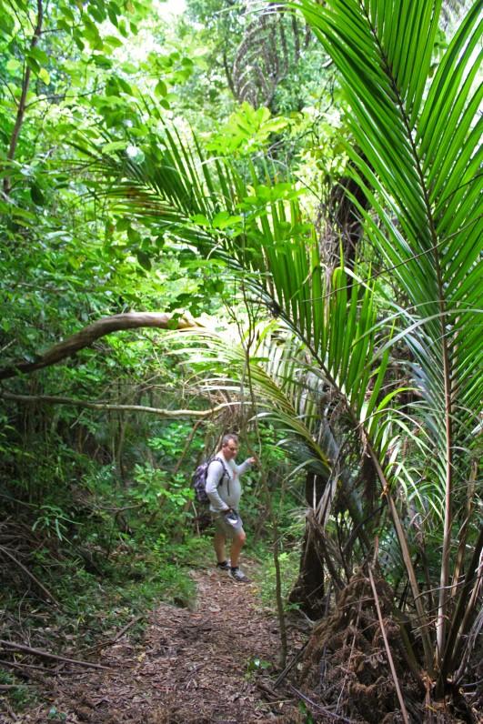 Kapiti Island Trig Track