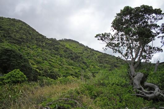 Kapiti Island vegetation
