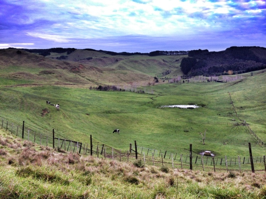 Farm, South Kaipara Head