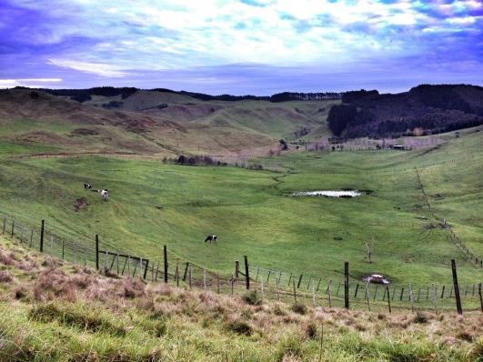 Farm, South Kaipara Head