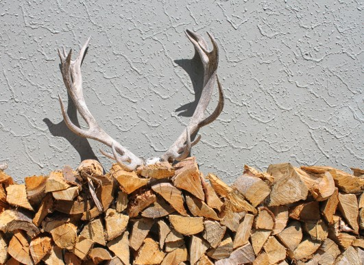 Antlers on a woodpile