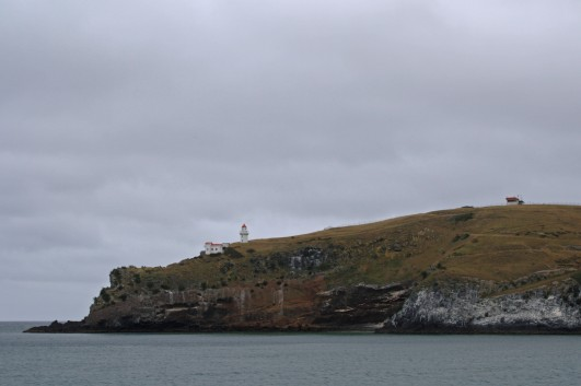 Looking across Otago Harbour to Tairoa Head, home to an albatross colony