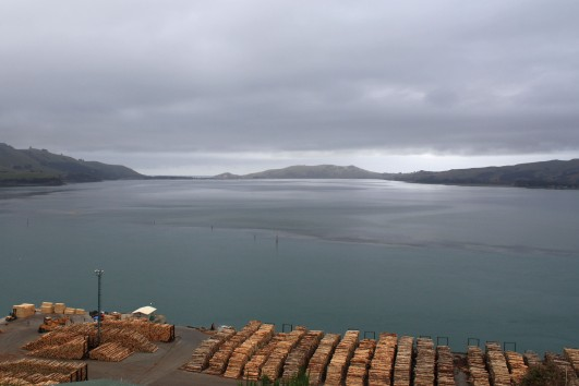 Otago Harbour