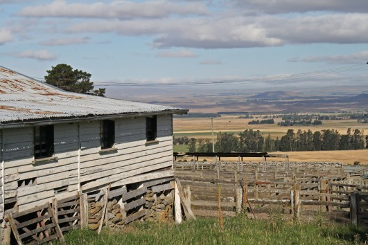 A woolshed with a view