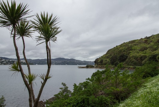 Shelly Bay Road, Wellington