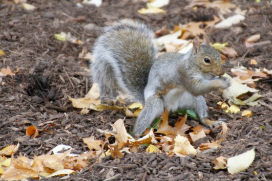 Finally, a squirrel pic
