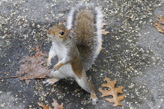 Time for more awesome squirrel cuteness