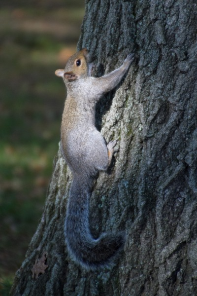 I now feel compelled to include a squirrel picture every day, where possible