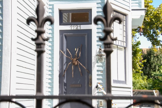 Many people chose the repulsive option of attaching huge spiders to their houses for Halloween decorations