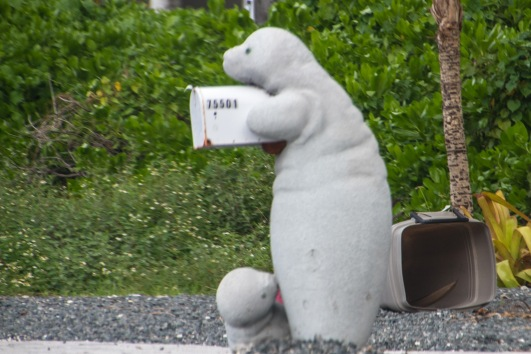 Many people along the highway had letterboxes incorporating sea mammals, such as this manatee (featuring suckling baby no less)