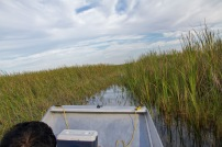 Airboat ride, Florida Everglades