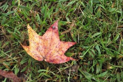 I found autumn!