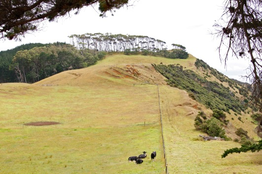 One of our common walks was along this ridge up to an historic site where a Maori settlement had been situated, long before Europeans settled in the area