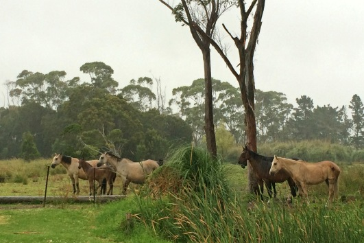 These horses weren't impressed. Yes it was Christmas morning, but it was raining and like me, Santa had overlooked them