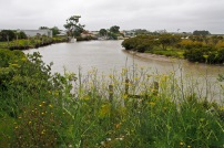 kaipara river