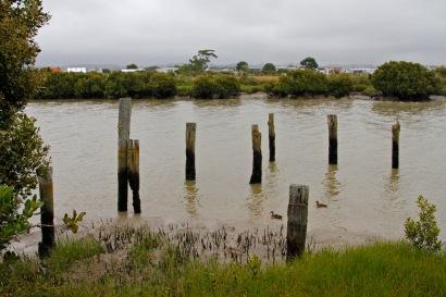 kaipara river old wharf pilings