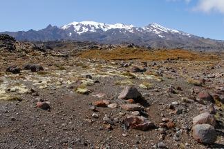 Mt Ruapehu from Scoria Flat