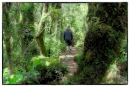 Nature walk, Whakapapa