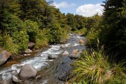 Whakapapanui Stream
