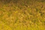 Native bush at Lake Okareka
