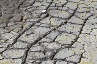 Dried mud patterns