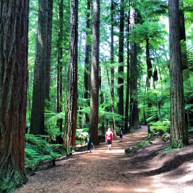 Walking in the Redwoods, Rotorua.