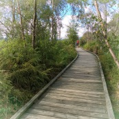 Boardwalk at the edge of Lake Rotorua