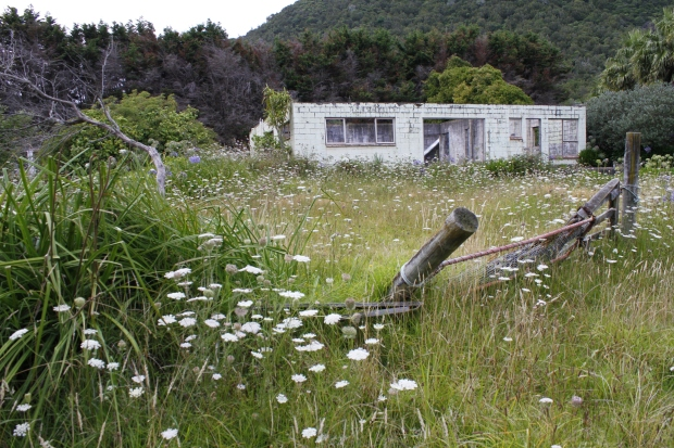 Once upon a time this was a motor camp. Now it's for sale as a lifestyle block.