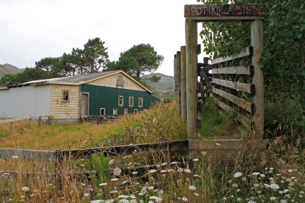 Potikirua Station, where my grandfather first worked after emigrating to NZ and going to farming and agricultural school. From here he moved on to Cape Runaway Station.