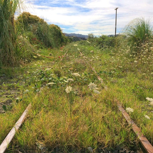 Taneatua Branch closed railway line